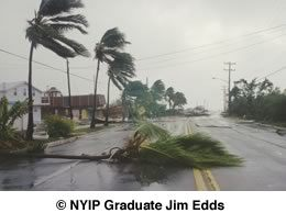A palm tree lies across part of the road after getting knocked over by the huge winds