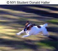 © NYIP Student Donald Haller