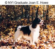 © NYIP Graduate Joan E. Howe
