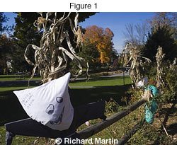 Richard Martin - Dynamic Range Photo
