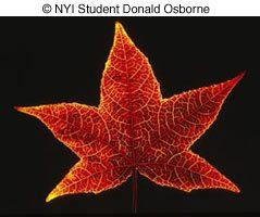 © NYI Student Donald Osborne image