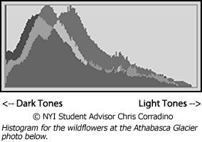 Histogram for wildflower photo below