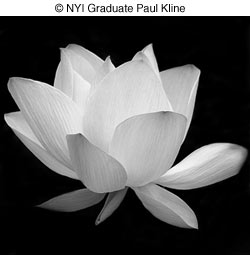 Student Profile Paul Kline