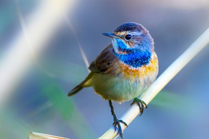 This Week's Photo Challenge- Birds